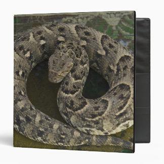 Bitis africano de la Soplo-serpiente del encantado