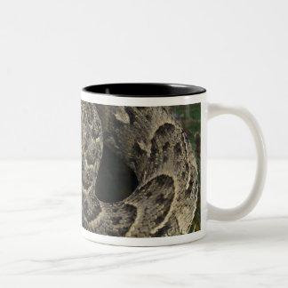 Bitis africano de la Soplo-serpiente del encantado Taza De Café