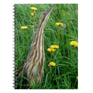 Bittern, northern Ontario water bird Notebook