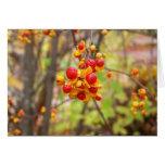 Bittersweet Berries Cards