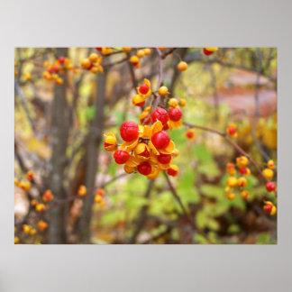 Bittersweet Berries Print