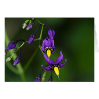 Bittersweet nightshade (Solanum dulcamara) Card