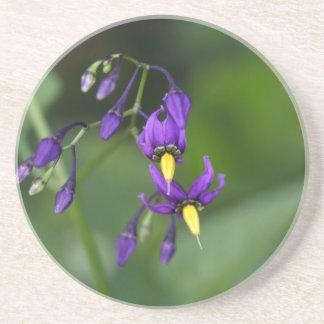 Bittersweet nightshade (Solanum dulcamara) Coaster