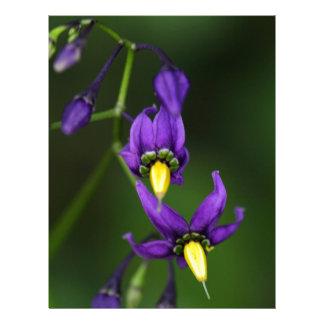 Bittersweet nightshade (Solanum dulcamara) Letterhead