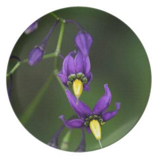 Bittersweet nightshade (Solanum dulcamara) Melamine Plate