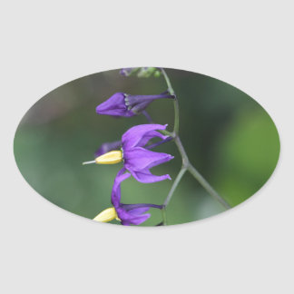 Bittersweet nightshade (Solanum dulcamara) Oval Sticker