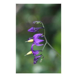 Bittersweet nightshade (Solanum dulcamara) Stationery