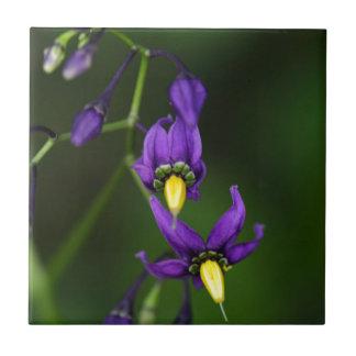 Bittersweet nightshade (Solanum dulcamara) Tile