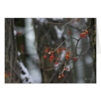 Bittersweet Winter Card