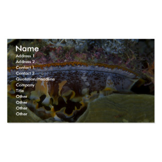 Bivalve from Papua, New Guinea Business Card Templates