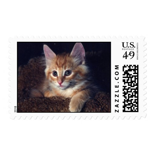 BjornCat001 Postage Stamp