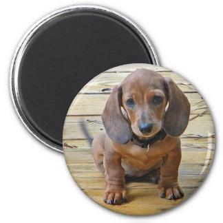 BK- Dachsund Puppy Magnet
