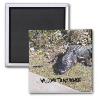 Black Alligator Welcomes You to His Home 2 Inch Square Magnet