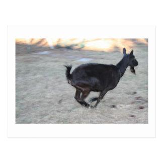 Black alpine goat doe running away to right postcard