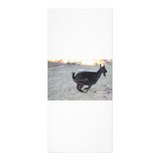 Black alpine goat doe running away to right rack card