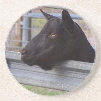 Black alpine goat doe waiting at metal gate drink coaster