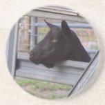 Black alpine goat doe waiting at metal gate coaster