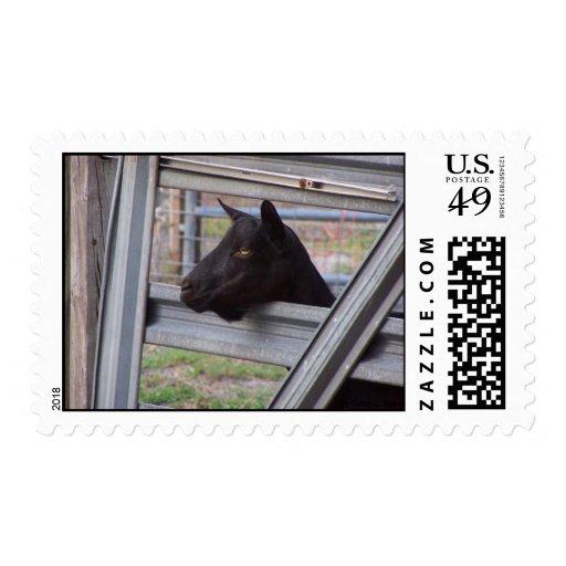 Black alpine goat doe waiting at metal gate postage stamps