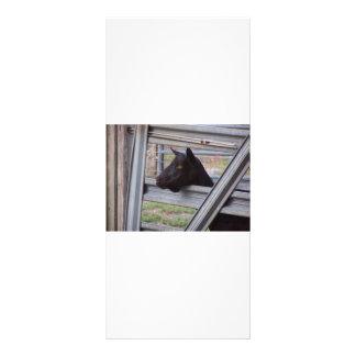 Black alpine goat doe waiting at metal gate rack card