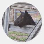 Black alpine goat doe waiting at metal gate classic round sticker