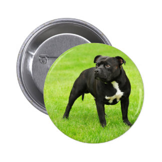 Black Amstaff Pinback Buttons
