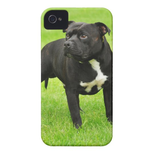 Black Amstaff iPhone 4 Cover