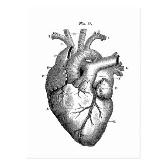 Black Anatomical Heart Postcard