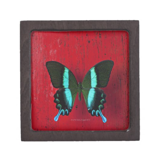 Black and blue butterfly on red wall keepsake box