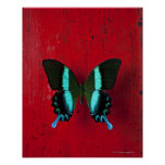 Black and blue butterfly on red wall print