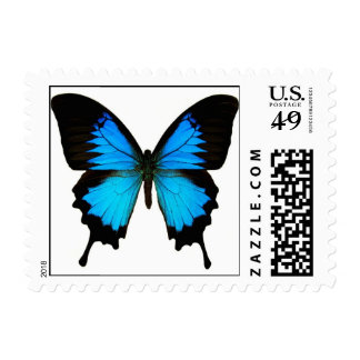 BLACK AND BLUE BUTTERFLY PICTURE POSTAGE