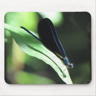 Black and Blue Damselfly Mousepad
