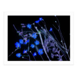 Black and blue invert of Florida wildflowers Postcard