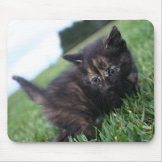 Black and brown baby kitten mousepad