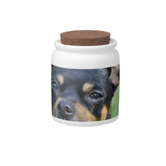 Black and Brown Chihuahua Candy Jar