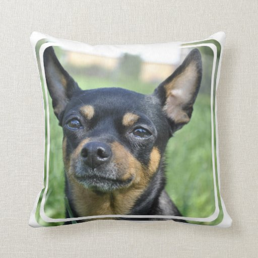 Black and Brown Chihuahua Pillow : Zazzle