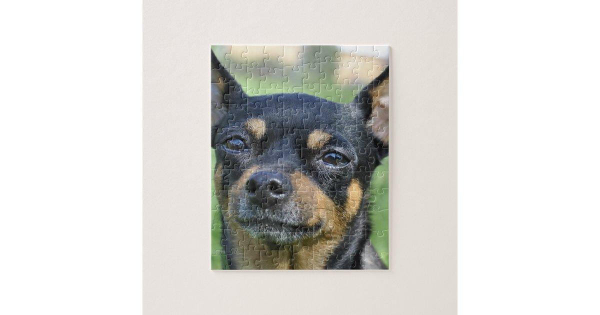 Black And Brown Chihuahua Puzzle Zazzle Com