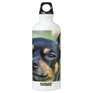Black and Brown Chihuahua SIGG Traveler 0.6L Water Bottle