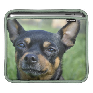 Black and Brown Chihuahua Sleeve Sleeves For iPads