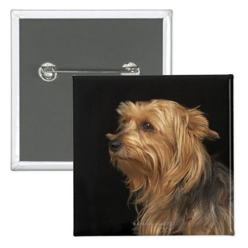Black and brown Yorkie left profile on black Button