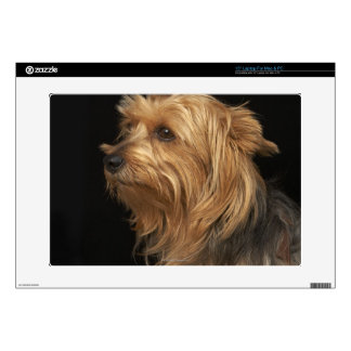 "Black and brown Yorkie left profile on black Decals For 15"" Laptops"
