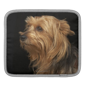 Black and brown Yorkie left profile on black iPad Sleeve