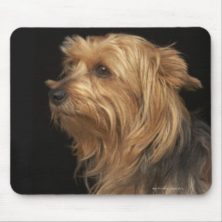 Black and brown Yorkie left profile on black Mouse Pad