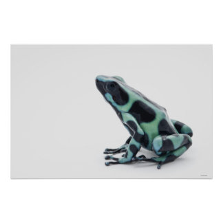 Black and Green Poison Dart Frog 2 Poster