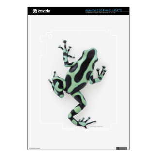 Black and Green Poison Dart Frog 2 Skin For iPad 3