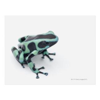 black and green poison dart frog (dendrobates postcard