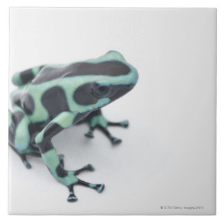 black and green poison dart frog (dendrobates tile