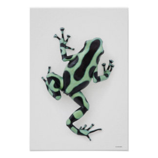 Black and Green Poison Dart Frog Poster