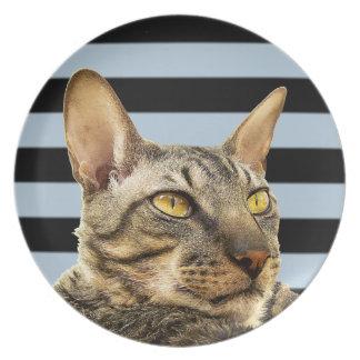 Black and grey stripe Cornish Rex cat plate