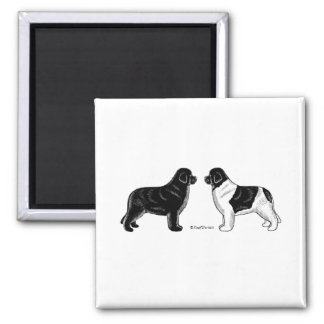 Black and Landseer Newfoundland Dogs Magnet