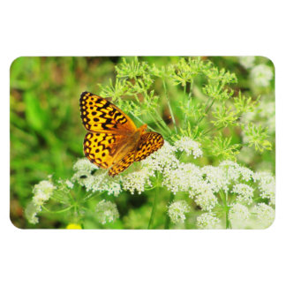 Black and Orange Butterfly on White Flowers Magnet